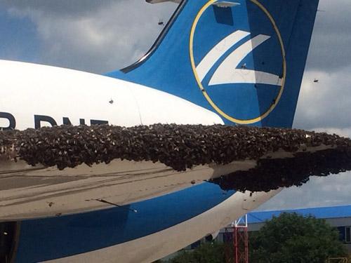 Пчелы на крыле самолета Днеправиа