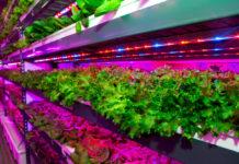 Выращивание растений на вертикальной ферме