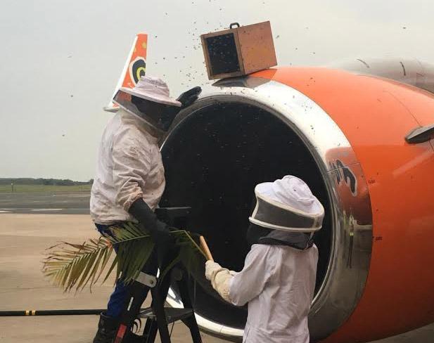Сбор пчел из двигателя Boeing 737 в аэропорту Дурбана