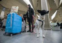 Перевозка животных в самолете разрешается многими авиакомпаниями