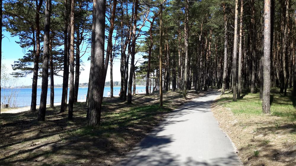 Лес рядом с пляжем на Балтийском море в окрестностях Таллинна