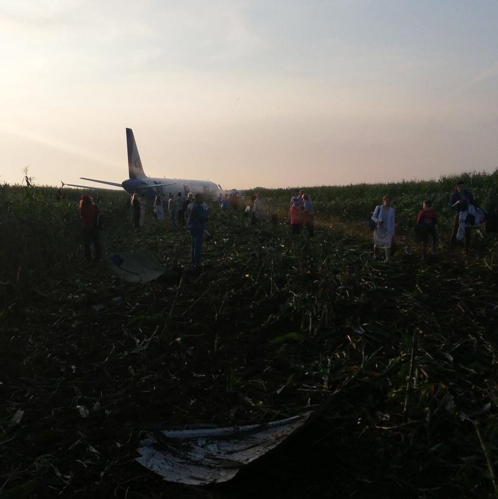 """Airbus A321 """"Уральских авиалиний"""" после посадки на кукурузное поле."""