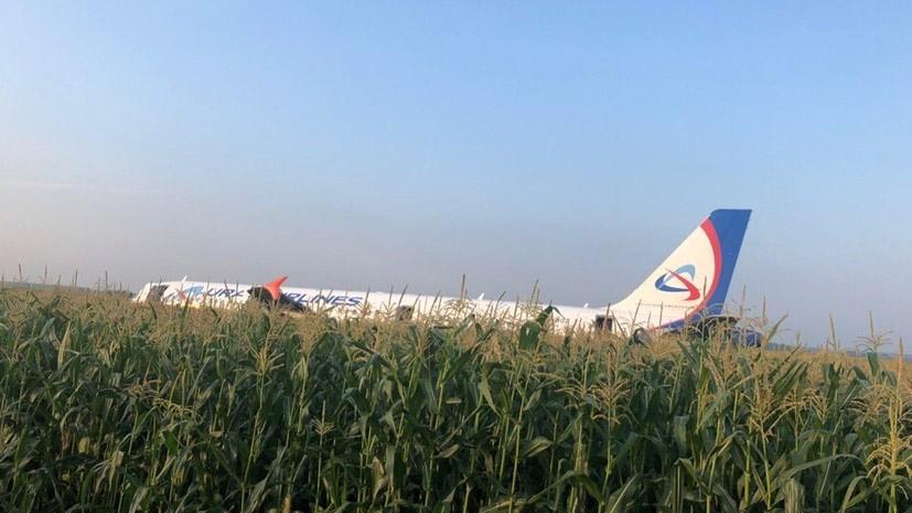 """Airbus A321 """"Уральских авиалиний"""" после посадки на кукурузное поле"""