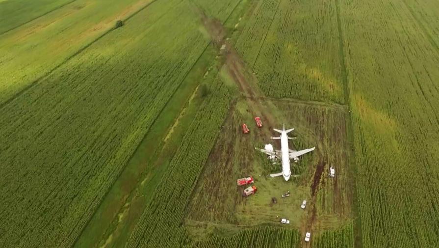 """Вид на поле с кукурузой, на которое сел Airbus A321 """"Уральских авиалиний"""""""