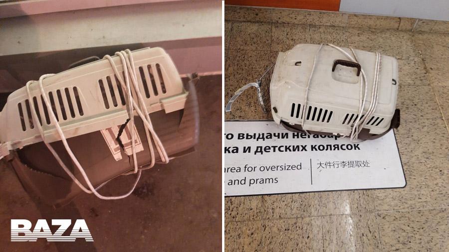 """Сломанные переноски с котами, которые перевозились рейсом """"Аэрофлота"""""""