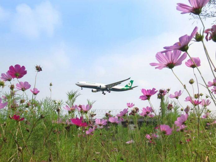 Самолет на фоне цветов. Фото: Eva Air