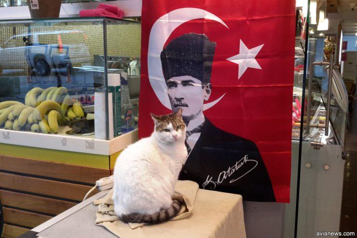 Кот в Стамбуле на фоне плаката с Ататюрком