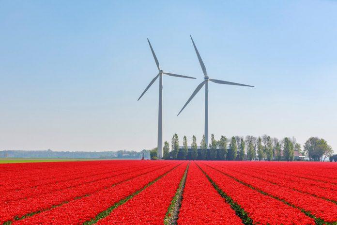 Поле из тюльпанов и ветровые электростанции в Нидерландах